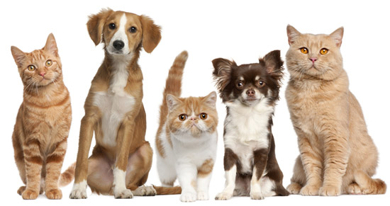 Crude fibre helps overweight cats and dogs to lose weight.
