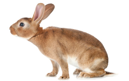 In rabbit breeding, lignocellulose reduces constipation problems and prevents diarrhoea.